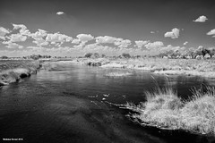 Okavango River (naturalturn) Tags: marsh wetland water river infrared blackwhite blackandwhite okavangoriver moremi moremigamereserve okavangodelta okavango delta botswana image:rating=5 image:id=204182