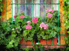 Flowers In The Window (sbox) Tags: spain malaga flowers windows windowboxes painterly painting digitalpainting digitalart textures geraniums españa