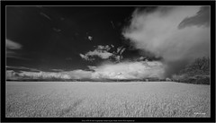 Sony A7R IR with Voigtlander Heliar-Hyper Wide 10mm f/5.6 Aspherical (Dierk Topp) Tags: a7r bw himmel ilce7r ir sonya7rir voigtlanderheliarhyperwide10mmf56aspherical clouds infrared landscapes monochrom sw sony wolken blackandwhite nature landscape ruralscene outdoors cloudsky nopeople sky nonurbanscene mobilestock blackcolor scenics cloudscape field dark dramaticsky colorimage monochrome white beautyinnature