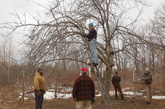 """Apple Pruning Party <a style=""""margin-left:10px; font-size:0.8em;"""" href=""""http://www.flickr.com/photos/91915217@N00/13528240995/"""" target=""""_blank"""">@flickr</a>"""