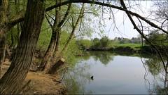 SANDFORD POOL, OXON. (Norfolkboy1) Tags: england riverthames oxfordshire sandfordonthames sandfordpool