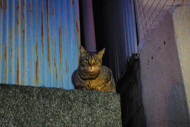 Today's Cat@2014-05-07