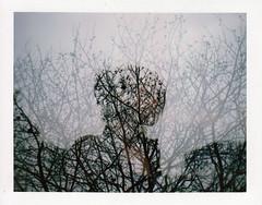 polaroid week (La fille renne) Tags: trees film nature girl silhouette analog polaroid outdoor doubleexposure gray multipleexposure instant fujifilm mx fp100csilk polaroid330 polaroidautomatic330landcamera