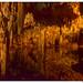 Península de Yucatán. México. Cenote.