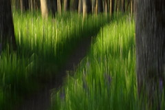 Into The Woods... (Obsidianphotog) Tags: trees art nature outdoors icm likeapainting salemor bushpark disappearingpoint photographytechnique