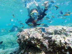 Karimun Jawa (zulfikaralex) Tags: travel beach island snorkeling traveling pulau pantai wisata karimunjawa jawatengah jepara kuliner