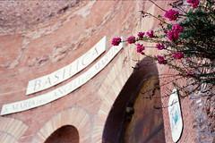 Rome in bloom (Alessio Vincenzo Liquori) Tags: rome flower roma film analog zeiss maria basilica fujifilm yashica martiri angeli pellicola fotografiaanalogica analogicait