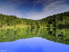 Pure reflection (Yolanta Z) Tags: stagathe