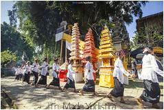 Old Dancers of Samuan Tiga (Bali Based Freelance Photographer and Photo Stocks) Tags: life people bali nature beauty canon indonesia eos photo foto stock culture daily cultural alam budaya balinese culturalevent myudistira madeyudistira myudistiraphotography