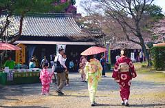 Japan Kyoto . . Daigo-ji   DSC_8188 (Ming - chun ( very busy )) Tags: travel flower japan cherry 50mm nikon kyoto blossom 28mm   cherryblossom  sakura kimono nikkor f18   d800 kimonos 28mmf18   50mmf18        traveljapan f1850mm   sukura    nikon28mmf18  nikon28mm18  f1828mm