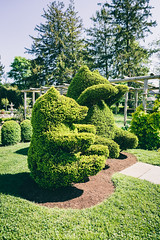Green Animals Topiary Garden, Newport, RI (Garret Voight) Tags: bear park plants green nature animals garden outdoors bush topiary newengland rhodeisland newport