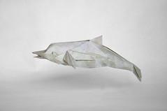 delfn kawahata (Pere Olivella) Tags: origami dolphin delfin papiroflexia kawahata dof