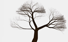 untitled (ARCHITECTURALECOLOGIES) Tags: tree art nature generative processing algorithm branching