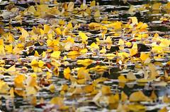 Sump (karakutaia) Tags: sun tree love nature japan paper temple tokyo heart afotando flickraward flickrglobal allbeautifulshotsandmanymoreilovenature flowerstampblackandwhite transeguzkilorestreetarturbanagreatshotthisisexcellentcontestmovementricohgxrserendipitygroupbluenatureicapturecardjapanesepapercardflickraward5jtrasognoerealtabstractelementsorganizersimplysuperbrockp