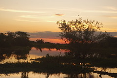 Sunset, Rurrenabaque, pampa excursion, Bolivia (ARNAUD_Z_VOYAGE) Tags: park street city windows sunset people sun white black tourism rain birds rio del clouds america forest butterfly river landscape boat spider town san pentax snake wildlife south small north bat bolivia du adventure international national rainy jungle moto sur monkeys josé province pampa sud kx beni buenaventura amérique rurrenabaque madidi ballivián