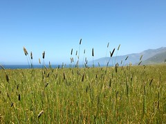 in the tall grass (petit hiboux) Tags: california travel bigsur california2014