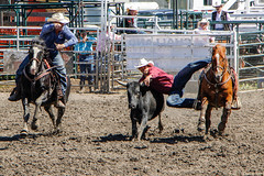Sundre Rodeo (hey ~ it's me lea) Tags: horses cowboys alberta rodeo calf sundre sundrerodeo teamcalfroping