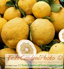 Yellow grapefruits of Sicily just collected from the lush tree orchard (FedericoFoto) Tags: food nature fruits yellow fruit shopping recipe marketing lemon italian mediterranean natural market stall bio lemonade basilicata eat bark buy grapefruit sicily citrus safe lime grocerystore puglia pompelmo limone calabria consumer consumption calabrese freshfruits vitamin sicilian remedy greengrocer vegetablemarket citurs fruitandvegetable