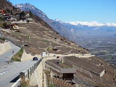 Vineyards around Martigny Ville!