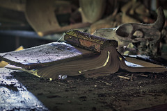IMG_7281R (Steven Kuipers) Tags: old ny newyork abandoned hotel book 85mm upstate explore forgotten catskills tattered urbex tannersville coldsprings