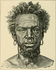 Grolier Encyclopedia's Caucasoid sub-races | Forum