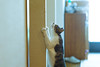 DSC06964.jpg (uedanagano) Tags: cats pets animal zeiss sony alpha 135mm a99 sal135f18za