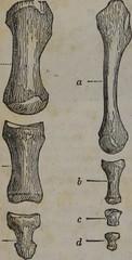 Anglų lietuvių žodynas. Žodis osteogeny reiškia osteogenezė lietuviškai.
