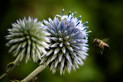 2014-07-31-Garten-Helmshagen-20140731-102936-i154-p0005-DSC-RX10-73.19_mm-.jpg