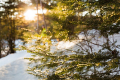 Arrowhead Provincial Park (Cassie D.) Tags: outdoors winter tree dof arrowhead provincial park canon 6d canon6d arrowheadprovincialpark