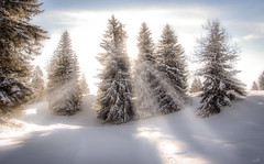 Spiritual white (VandenBerge Photography (this week mostly absent)) Tags: sunbeams sunburst switzerland snow snowscape white winter pinetrees season canon illgau centralswitzerland cantonschwyz oberberg light sun nature nationalgeographic lonelyplanet serene bright