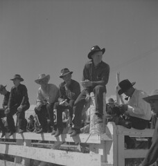 Group of cowboys sitting on a fence watching the competitions at the Calgary Stampede, Alberta / Groupe de cow-boys assis sur une clôture pour regarder les compétitions, Stampede de Calgary (Alberta) (BiblioArchives / LibraryArchives) Tags: lac bac libraryandarchivescanada bibliothèqueetarchivescanada canada canada150 alberta calgary 1940 calgarystampede stampededecalgary men hommes cowboys fence clôture competition compétition cowboyhats chapeauxdecowboy stetson ronnyjaques