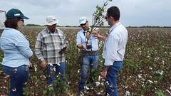 Visitas en terreno (Cooperacion Brasil-FAO) Tags: algodón proyecto cooperaciónsursur colombia fao
