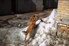 Spring, dog, bird. (pat_ru_shev) Tags: nikonfm2 film 501 8