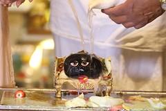 Ramanavami 2017 - ISKCON London Radha Krishna Temple Soho Street - 05/04/2017 - IMG_0600 (DavidC Photography 2) Tags: 10 soho street radhakrishna radha krishna temple hare krsna mandir london england uk iskcon iskconlondon internationalsocietyforkrishnaconsciousness international society for consciousness spring wednesday 5 5th april 2017 ramanavami lord sri jaya jai rama ram ramas ramachandra bhagavan appearance day festival ramayana raghupati raghava raja patita pavana sita