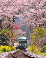 ' ' 【京都の桜】賀茂川 ' 2017.4.10撮影 ' #oita #大分 #日田 #豊後中川駅 #久大本線 #ゆふいんの森 #桜 #花 #flower #team_jp_ #gf_japan #igersjp #ig_japan #ig_nippon #wu_japan #loves_nippon #lovers_nippon #japanfocus #icu_japan #wonderful_places #ptk_japan #japan_daytime_view #japan_of_insta