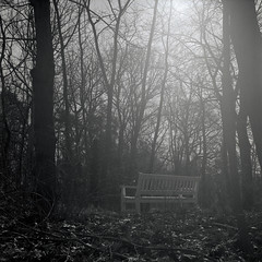 Bank in the Wood (ucn) Tags: tessar filmdev:recipe=11301 fomafomapan400 adoxadoluxatm49 film:brand=foma film:name=fomafomapan400 film:iso=400 developer:brand=adox developer:name=adoxadoluxatm49 rolleiflex35b bank backlight gegenlicht mxevs