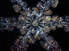 11feb17i (peterobrien186) Tags: pleochroic crossedpolarized macro snowflake snow crystal ice snowcrystal winter nature reflected diffuse