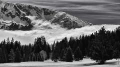 là bas l'inconnu (glookoom) Tags: bw blackandwhite gris monochrome noiretblanc montagne massif merdenuages nature nuage sapin contraste arselle neige snow landscape paysage chamrousse alpes france foret