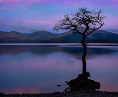 The Milarrochy Tree (jasty78) Tags: milarrochytree milarrochybay milarrochy lochlomond loch tree sunrise scotland nikon d5200 sigma35mmf14