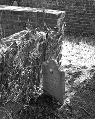 Blandford Cemetery (Lys Bleu) Tags: blandfordcemetery petersburgvirginia petersburg cemetery graveyard ivy grave tombstone headstone brickwall