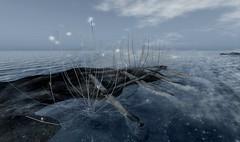 {anc} crystal bush@Fifty Linden Fridays (Bisou @ The Outer Garden) Tags: inworld deco panel light cloud ancltd ground groundpanel crystal virtualworld sl 2017 anc avatar flf 3d mist