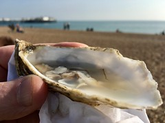 Today's oyster on the beach.