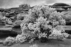 Canyonlands NP (kattewompus) Tags: canyonlands nex7 tree rocks utah moab 20mm28d