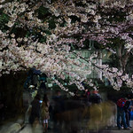 Chidorigafuchi in night (千鳥ヶ淵公園)