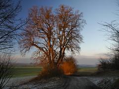 Tillylinde (Rainer Wendland) Tags: winter gieseberg elkershausen leinetal landkreis göttingen landkreisgöttingen naturparkmünden schnee tillylinde gemeindefriedland sylvester abend newyear´seve