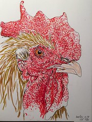 A rooster a day, day 30/31 (anviss) Tags: illustration sketch illustratie schets tekening haan rooster tombow marker stift stabilo ink red brow rood