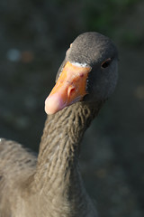 255 (AO'Brien) Tags: arklow wicklow autumn birds