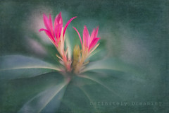 Hello Spring! (DefinitelyDreaming) Tags: dreamy painterly floral spring flowers pink green lensbaby sweet50 maco textures