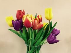 Tulips (KelJB) Tags: flowers colours bouquet base flowersincase tulips