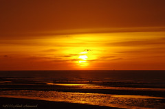 Belgian coast (Natali Antonovich) Tags: belgiancoast seasideresort seaside seashore seaboard sea northsea horizon landscape nature sunset sun sky bird seagull reflection parallels water belgium belgique belgie
